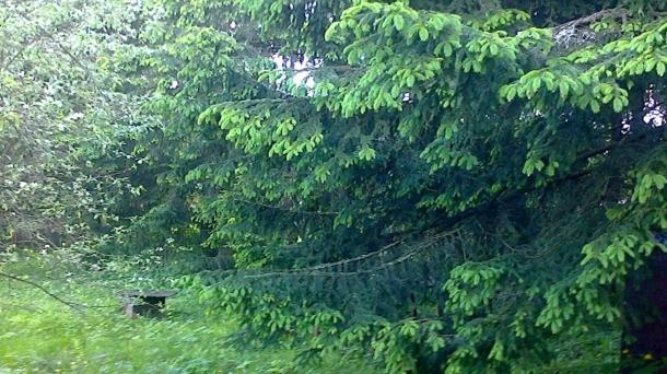 Земля 1500м2, Московская область,  Щелковский  Московская область,  СНТ Заозерный садовое товарищество,  Фряновское шоссе